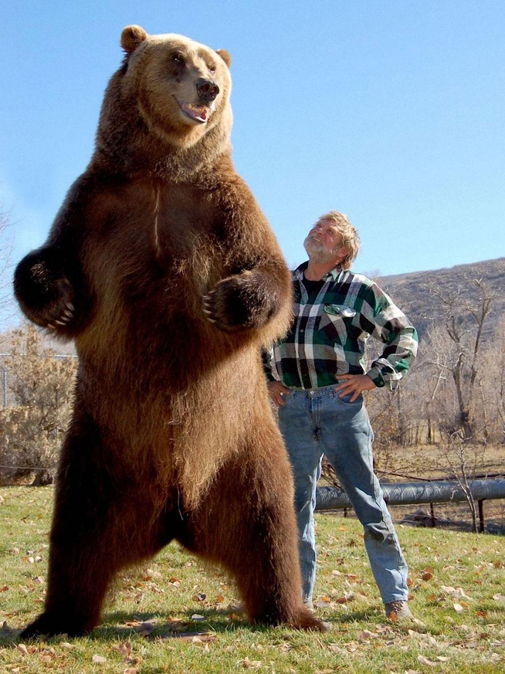 Medved-grizli-i-ego-dressirovshhik-Dag-S