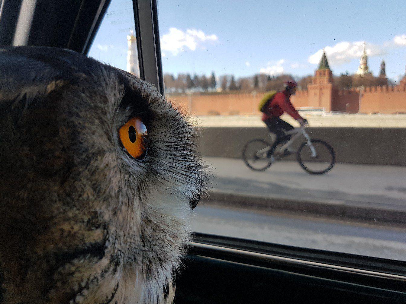 Когда хочешь кататься велосипеде