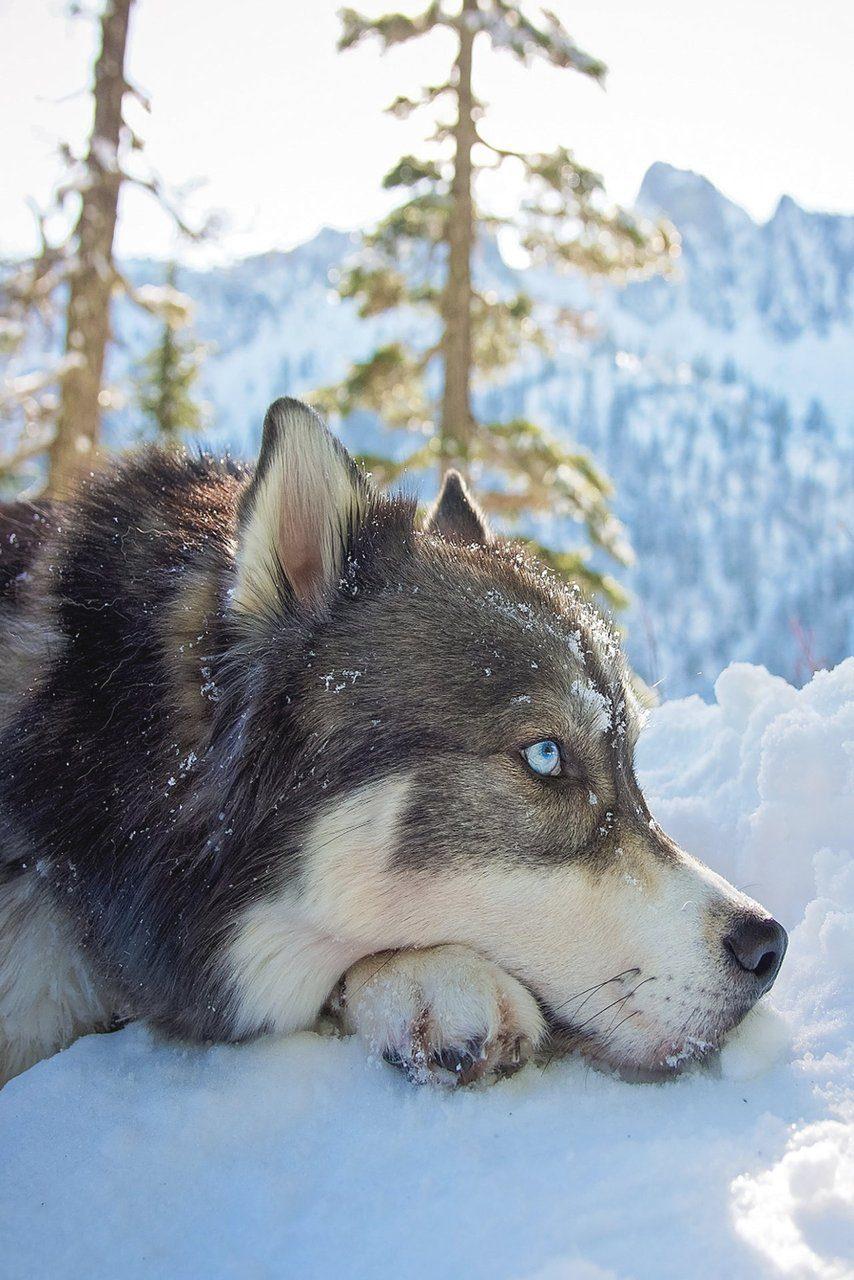 Зимний пёс
