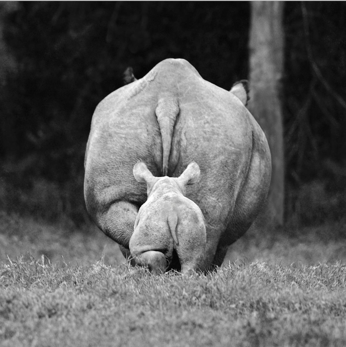 Носорожик с мамой