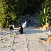 Котики в Писсури