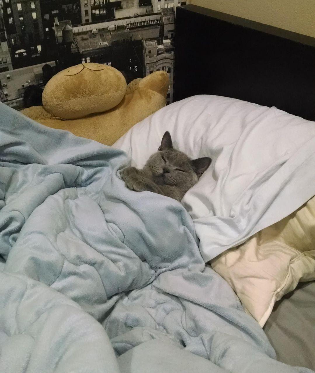 Спокойной ночи, масики!