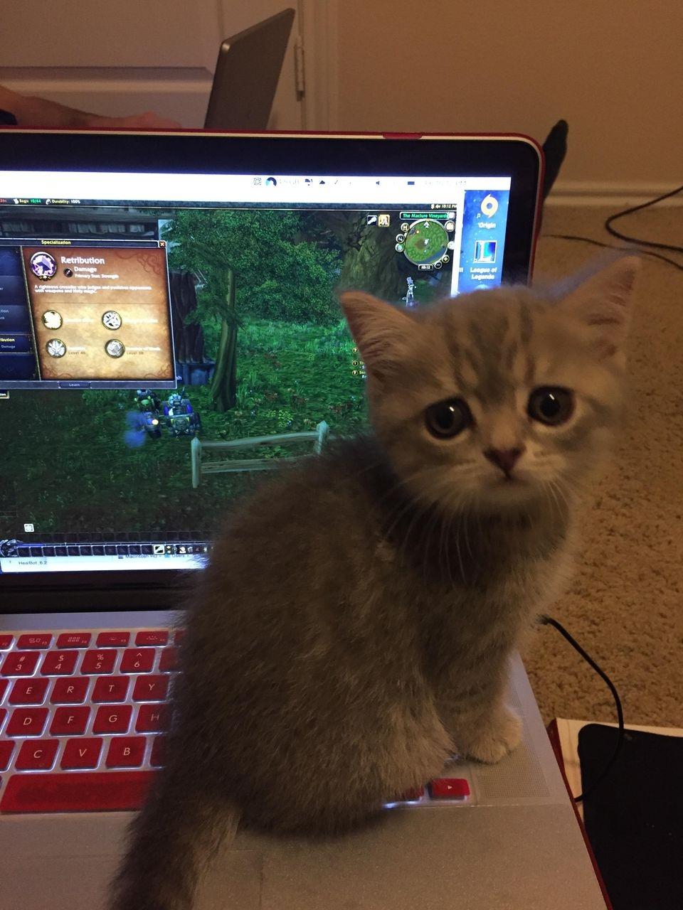 Котенька тоже очень хочет в Warcraft
