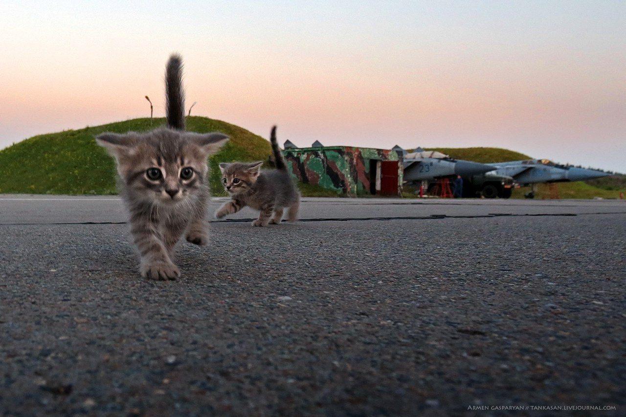 Бойцовские Коты Кровавого Режима