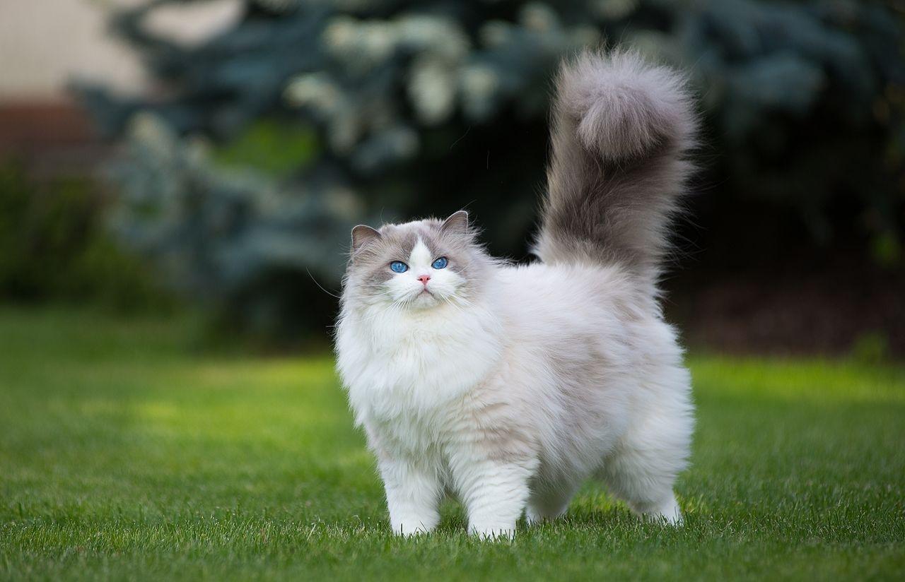 Роскошная котя