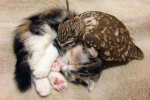 котёнок и совёнок