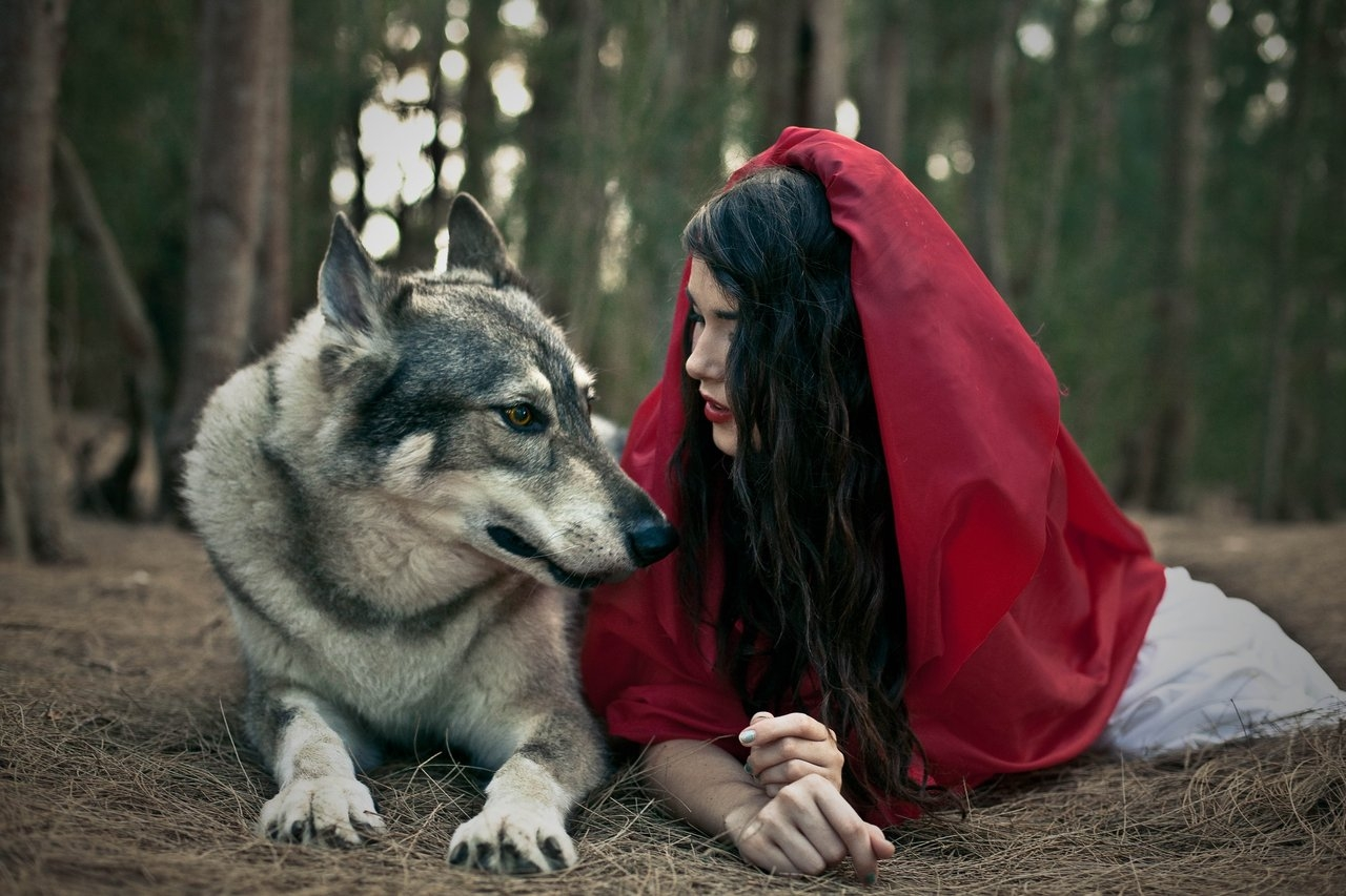 Серый волк и Красная шапочка