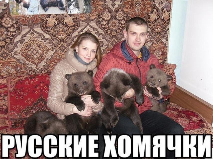 русские хомячки