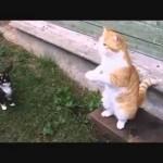 Котики отжигают :)