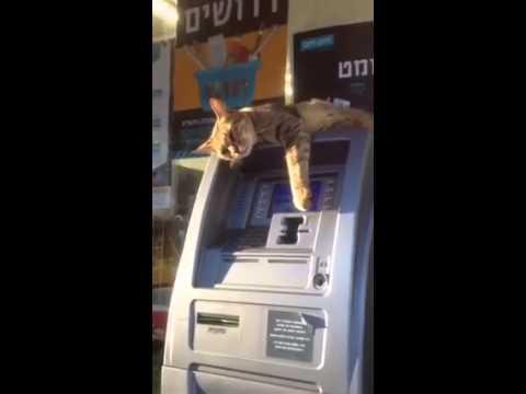 Банкомат не работает!