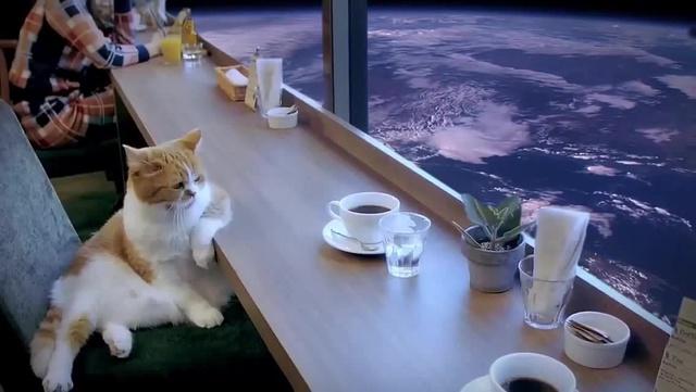 Кот, грусть и холодный космос