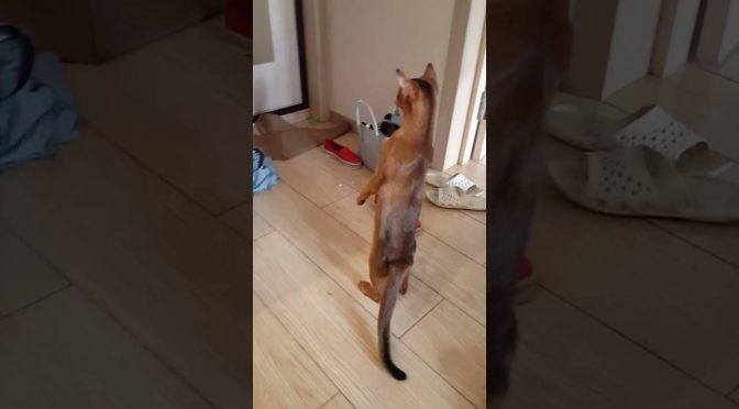 Кот Паштет и страшное зеркало