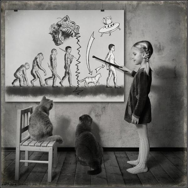 Эволюция человека: кошачья версия :)
