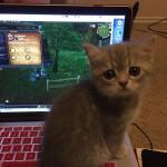 Котенька тоже очень хочет в World Of Warcraft