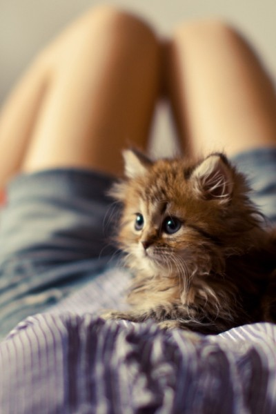 Котёныш на страже хозяйки