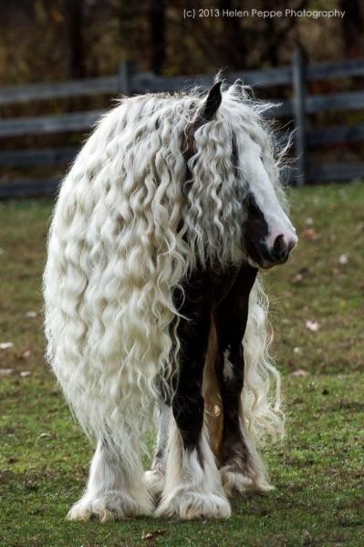 Лошадка-красавица!