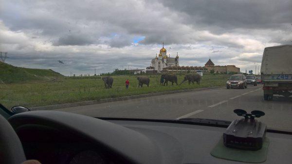 Россия— родина слонов