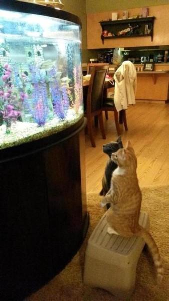 У котиков свои телевизоры...